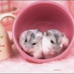 让我们做一对幸福的老鼠
