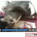 让所有浏览器支持HTML5 video视频标签